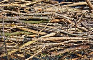 rameaux et petites branches pour du BRF